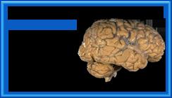 Ram_hjärnan