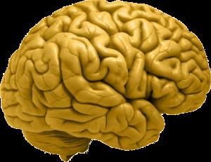 hjärna_guld
